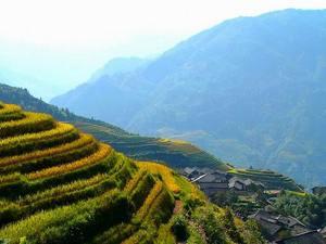 Rizières en terrasses de longji